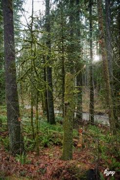 Oregon Day 3 257