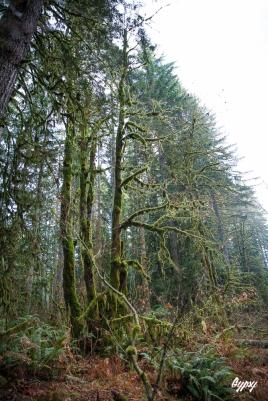 Oregon Day 3 286